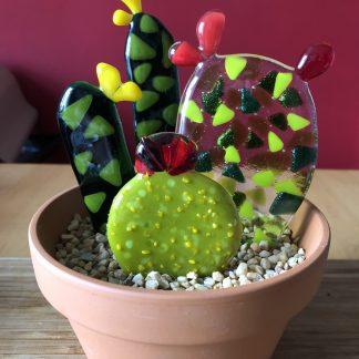 Glass cactus variety pot