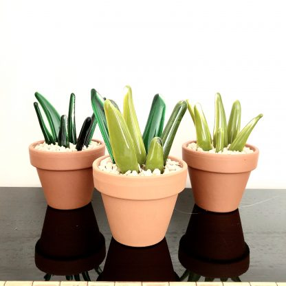 Aloe vera style cactus- front view