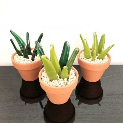 Aloe vera style cactus
