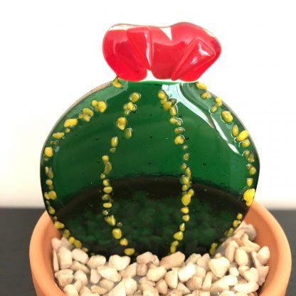 Flowering cactus - close up