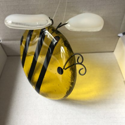 Glass bee transparent wings folded